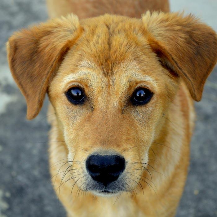 Les chiens d'Hamahe par Maeva BEAURAIN, comportementaliste canin à CUVAT en Haute-Savoie. Article : le chien, reflet de nos émotions